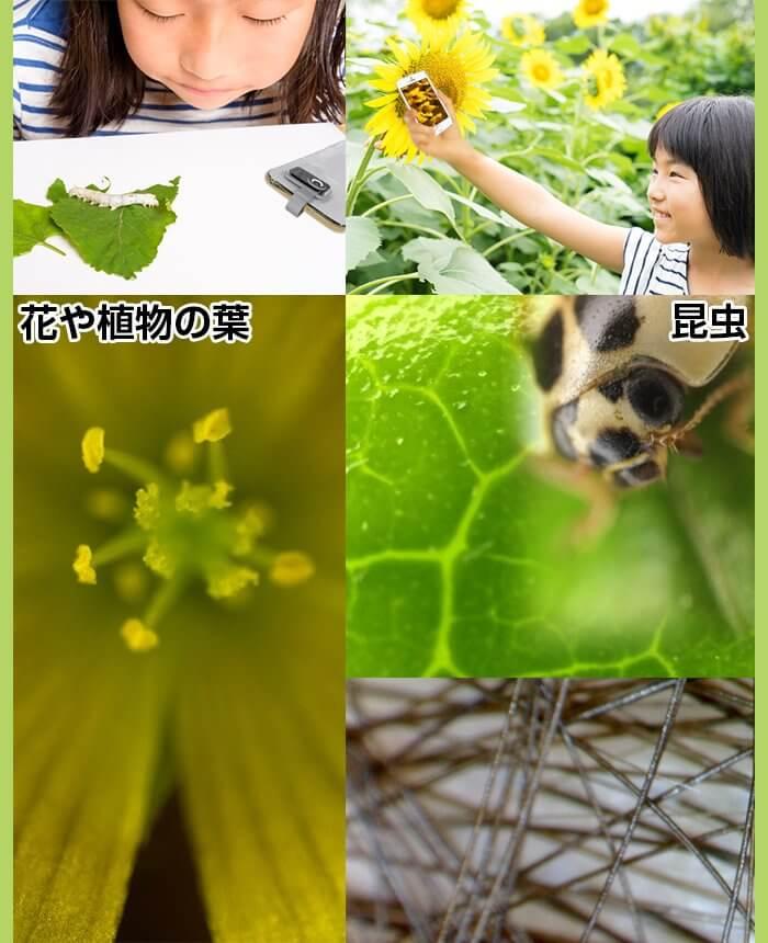 花や植物の葉、昆虫